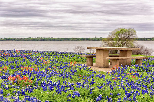 Photograph - Picnic In The Bluebonnets by Victor Culpepper