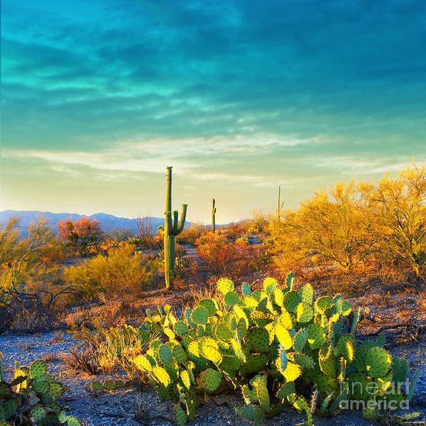 Wall Art - Photograph - Picturesque, Serene Sunset In Saguaro by Katrina Leigh