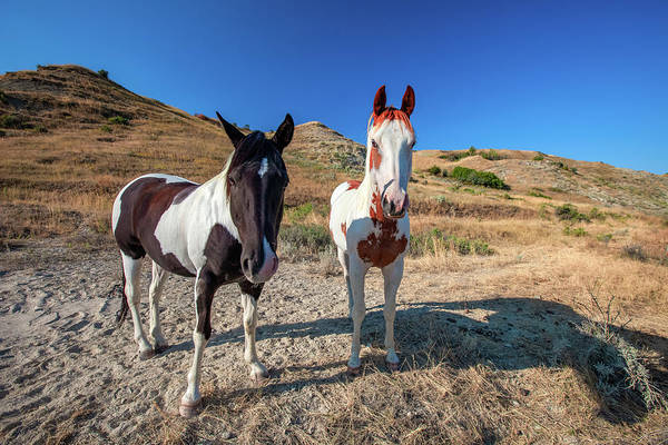 Photograph - Piebald And Skewbald by Todd Klassy