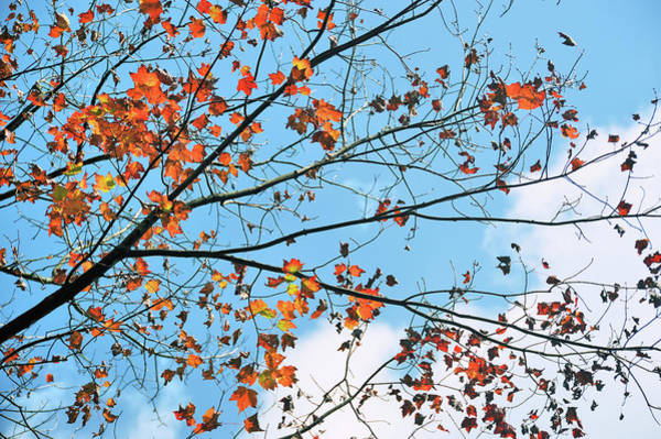 Photograph - Pieces Of Autumn by JAMART Photography