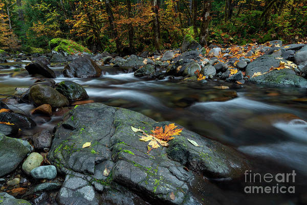 Wall Art - Photograph - Pieces Of Autumn by Mike Dawson