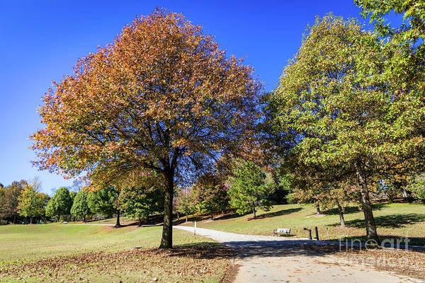 Photograph - Piedmont Park Atlanta Ga 2 by Sanjeev Singhal