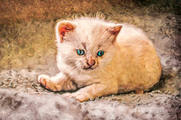 Digital Art - Piercing Blue Eyed Kitty by Don Northup