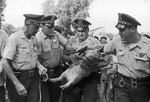 Democratic Party Photograph - Pigasus Arrested by Fred W. McDarrah