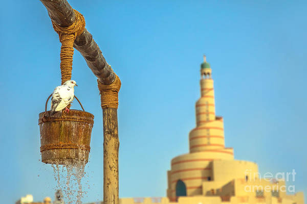 Photograph - Pigeon At Old Well by Benny Marty