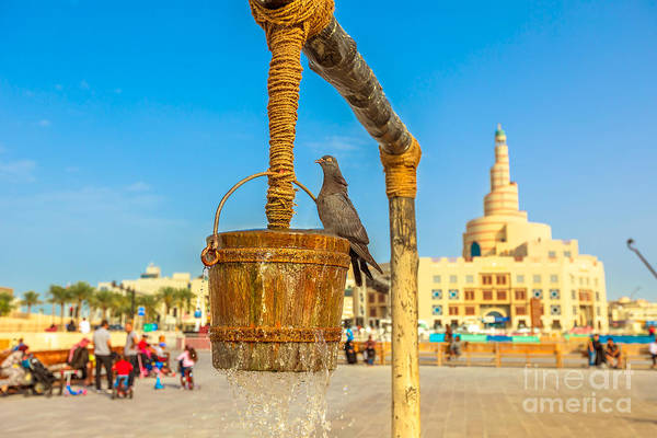 Photograph - Pigeon At Old Well Doha by Benny Marty