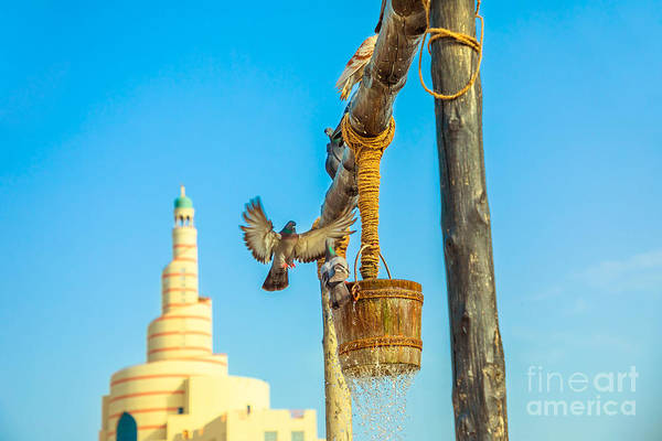 Photograph - Pigeon Flying At Old Well by Benny Marty