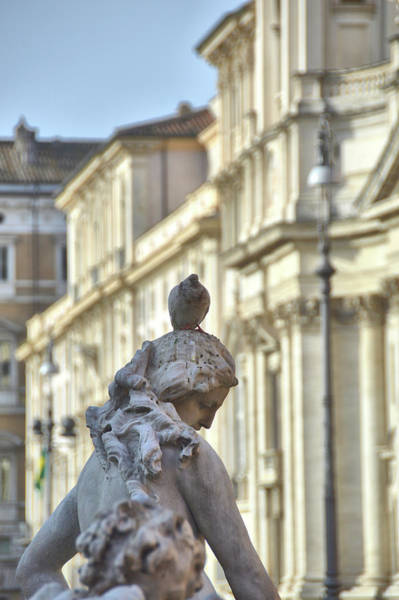 Photograph - Pigeon Parking by JAMART Photography