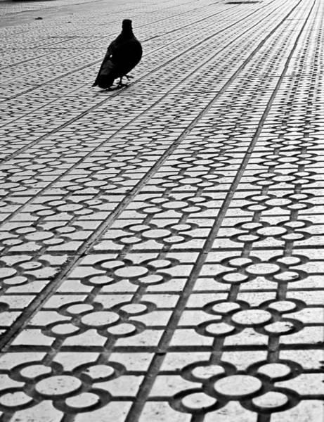 Bilbao Photograph - Pigeon Walks On Typical Tiles Bilbao by Eneko Garcia Ureta - Fotografía