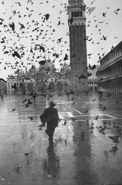 St Mark's Basilica Photograph - Pigeons Consuming Space In Piazza San Ma by Dmitri Kessel