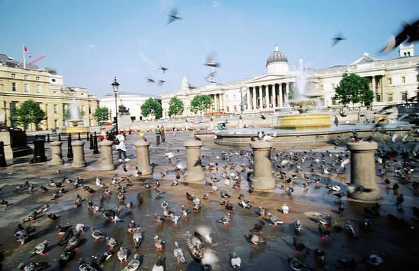 City Of David Photograph - Pigeons In Trafalgar Square by David Hannah