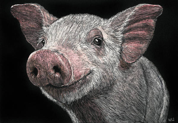 Drawing - Piglet by William Underwood