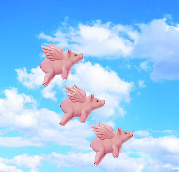 Kitsch Photograph - Pigs Might Fly by Peter Dazeley