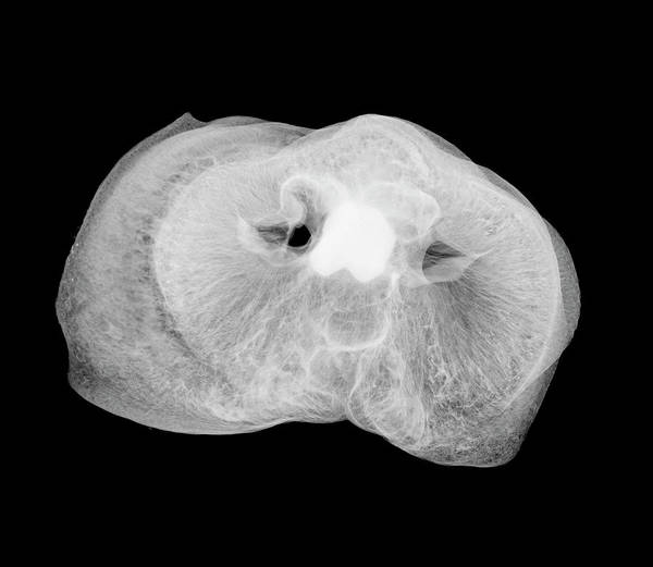Pig Photograph - Pigs Snout by Nick Veasey