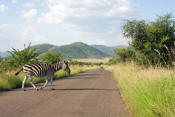 One Way Road Photograph - Pilanesberg National Park, North West by Stuart Fox