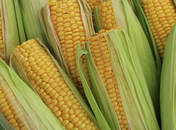 Ranch Photograph - Pile Of Corn On Cob With Top Cut Off by Ssuni