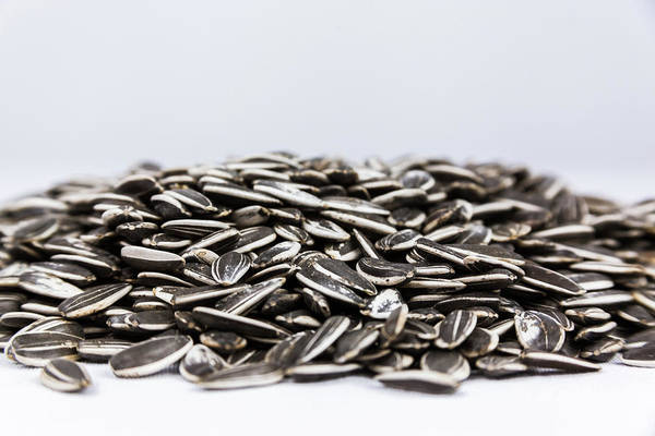 Photograph - Pile Of Sunflower Seeds by Jeanette Fellows