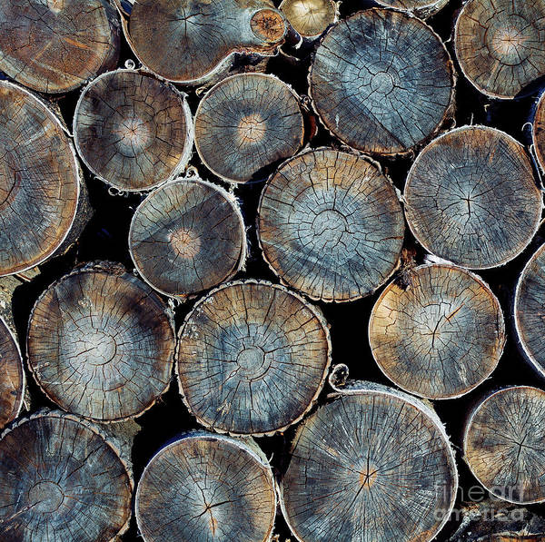 Circular Wall Art - Photograph - Pile Of Wood Logs Ready For Winter by Zastolskiy Victor