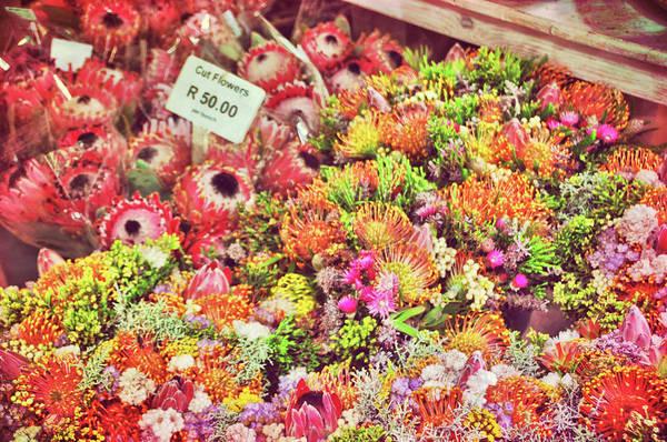 Photograph - Pincushion Petals by JAMART Photography
