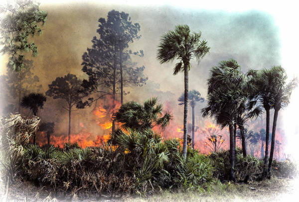Photograph - Pine And Palmetto Fire by Robert Potts
