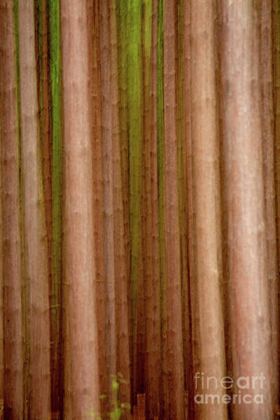 Wall Art - Photograph - Pine Blur by Todd Bielby