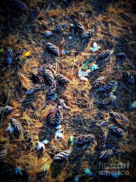Photograph - Pine Cones Morning Sunlight by Frank J Casella