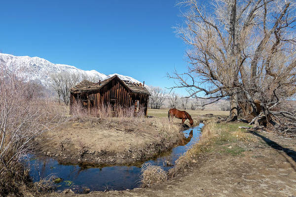 Photograph - Pine Creek Horse Drinking by Jan Davies