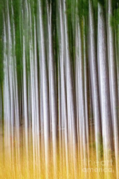 Wall Art - Photograph - Pine Forest Pan by Todd Bielby
