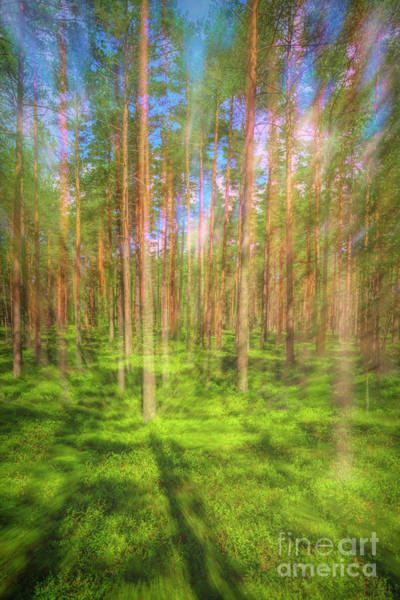 Wall Art - Photograph - Pine Land 2 by Veikko Suikkanen