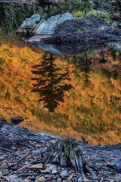 Photograph - Pine Reflection And Old Bones On Beaver Pond by Jeff Folger