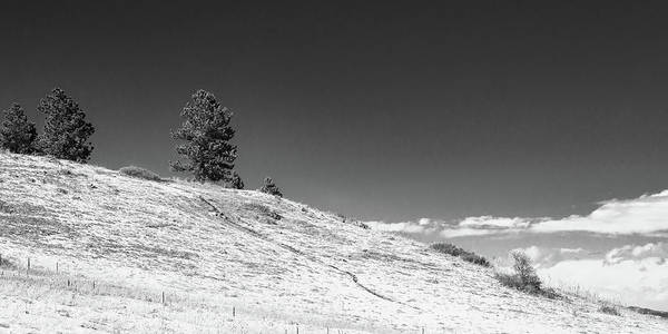 Photograph - Pine Ridge by Dan Urban