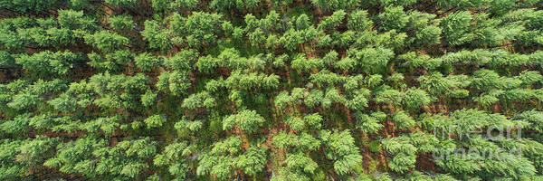 Wall Art - Photograph - Pine Rows Aerial 3x1 by Twenty Two North Photography