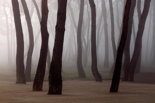 Pine Tree Photograph - Pine Tree Forest In Mist by Min Geolshik