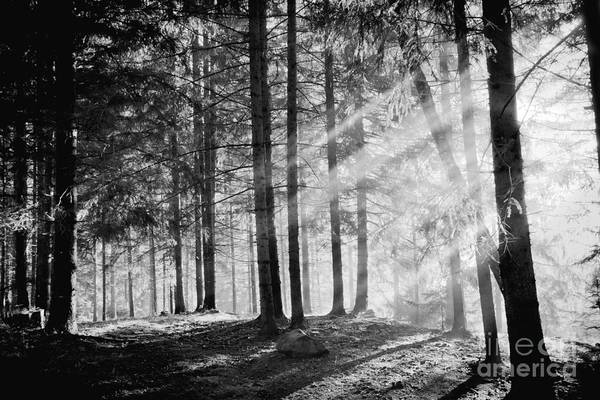 Wall Art - Photograph - Pine Tree With Lights And Fog,black And by Hofhauser