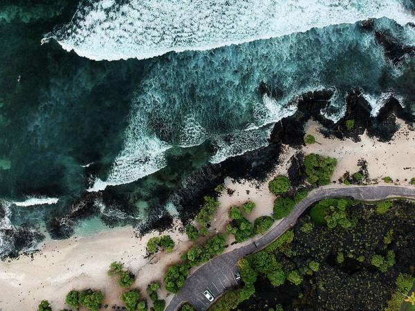 Wall Art - Photograph - Pine Trees Beach  by Christopher Johnson