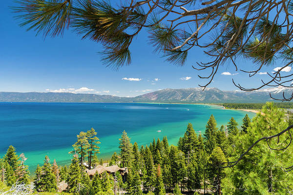 Lake Tahoe Photograph - Pine Trees, Lake Tahoe, California, Usa by Stuart Dee