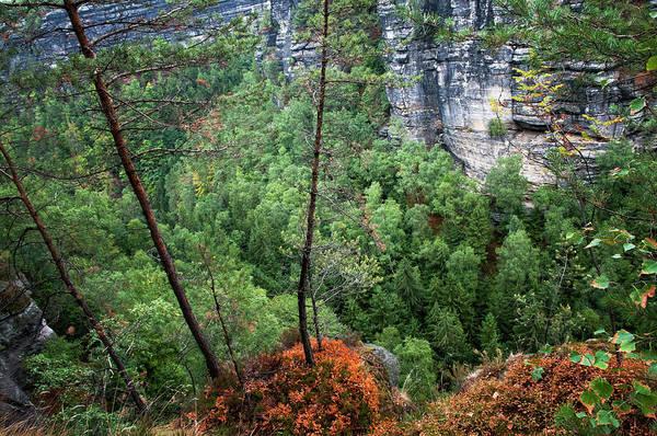 Photograph - Pine Trees On The Rocks. Bohemian Switzerland by Jenny Rainbow