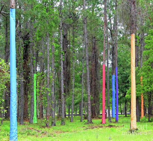 Photograph - Pine Trees Wrapped In Color by D Hackett