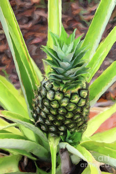 Photograph - Pineapple by Jeff Breiman