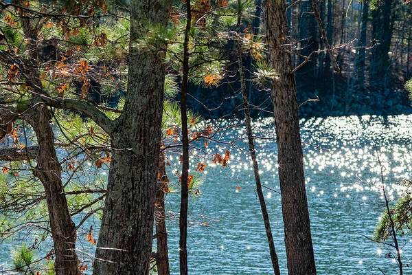 Wall Art - Photograph - Pines And Diamonds by Mary Ann Artz