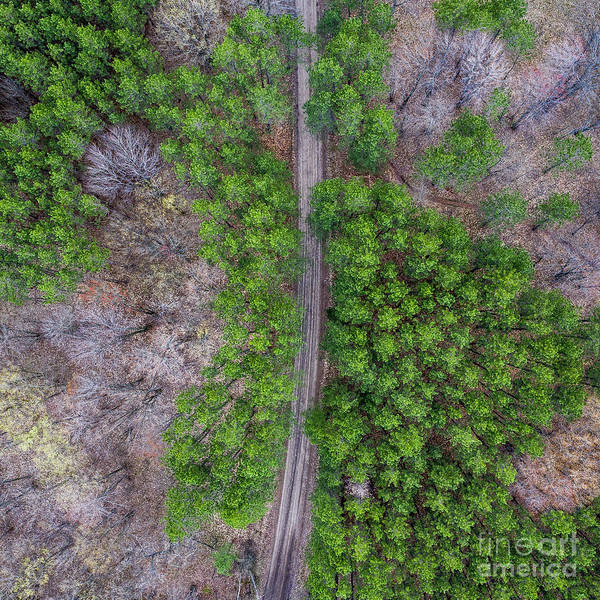 Wall Art - Photograph - Pines In Manistee River Aerial by Twenty Two North Photography