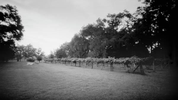Photograph - Pinhole Vineyard 071903 by Rudy Umans
