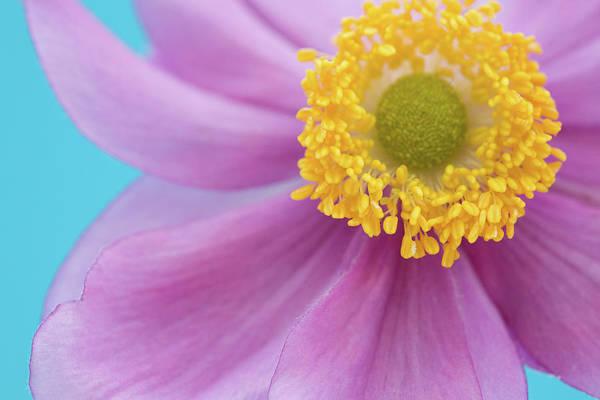 Wall Art - Photograph - Pink & Bright Blue by Paula Daniëlse