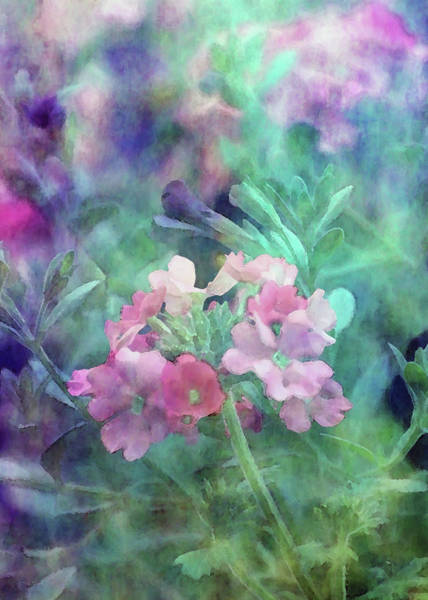 Photograph - Pink And Purple 6532 Idp_2 by Steven Ward