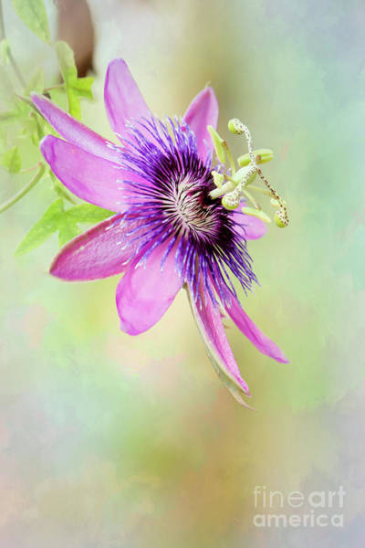 Photograph - Pink And Purple Passion by Sabrina L Ryan