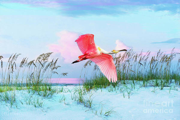 Wall Art - Photograph - Pink Burst Of The Roseate Spoonbill by Laura D Young