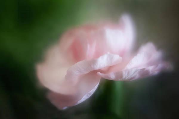 Wall Art - Photograph - Pink Carnation by Cyndy Doty