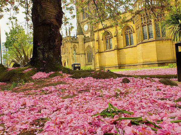 Photograph - Pink Cherry Blossom Petals On The Ground by Iordanis Pallikaras