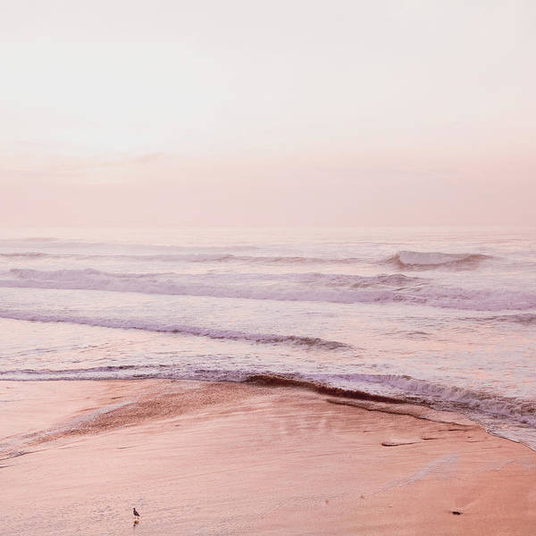 Wall Art - Photograph - Pink Coastal by Bonnie Bruno