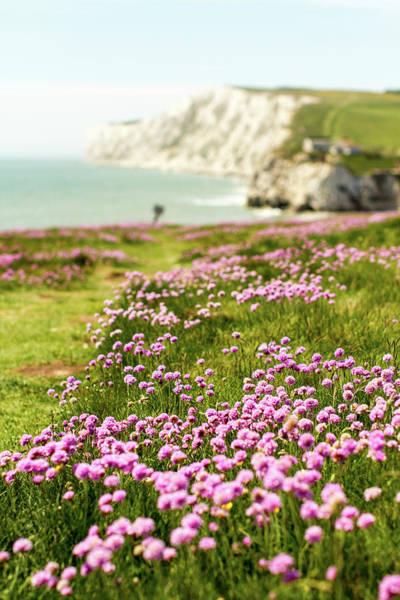 Freshwater Wall Art - Photograph - Pink Coastal Path by S0ulsurfing - Jason Swain